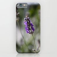 iPhone & iPod Case featuring lavendar by Theresia Pauls