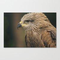 Power Bird I Canvas Print