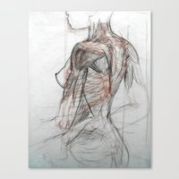 Posterior Musculature Canvas Print
