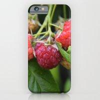 Raspberries iPhone 6 Slim Case
