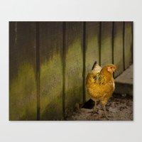 Orange chicken Canvas Print
