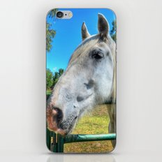 Horsey!  iPhone & iPod Skin