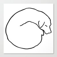 Curled Dog Canvas Print