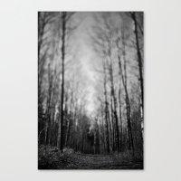 Traveled Trail. Canvas Print