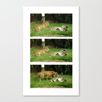 Playfight Canvas Print