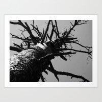 dead tree 2016 Art Print