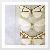 Moth Wings Art Print