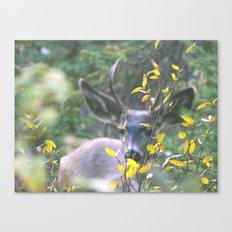 Like a deer in headlights Canvas Print