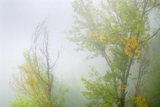 Secrets trees in fog Art Print
