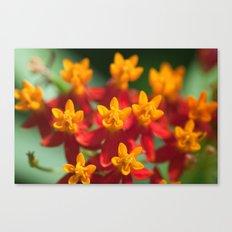 Exotic Flower  411 Canvas Print
