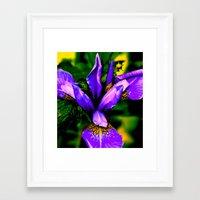 Iris close up Framed Art Print