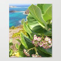 St. Barts succulents Canvas Print