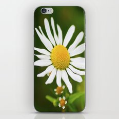 Wild Daisy iPhone & iPod Skin