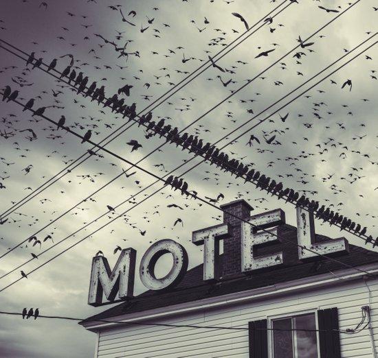 The Bird Motel Art Print