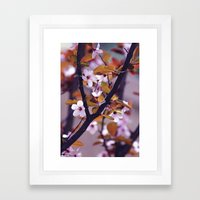 Cherry Blossom 2 Framed Art Print