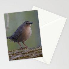 Gray Catbird near Sunrise Stationery Cards