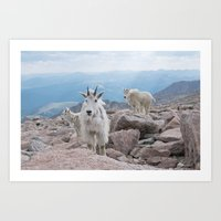 Friends at 14,000 Ft. Art Print