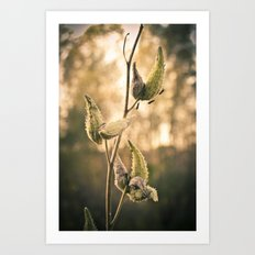 milk weed and stink bugs Art Print