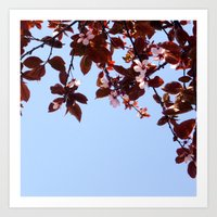 cherry blossom Art Prints featuring Cherry Blossom by madbiffymorghulis