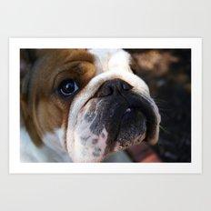Bulldog Baby Art Print