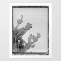 Old Photo Of A Cactus Art Print