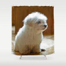 Coton de Tulear Puppy Shower Curtain