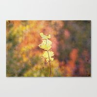Seasonal Closeup - Autum… Canvas Print