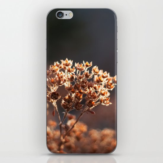 Morning's Light iPhone & iPod Skin