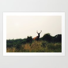 Prairie Creek Elk Art Print