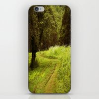 A Summers Trail iPhone & iPod Skin