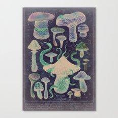 The Fungus Kingdom - Nocturnal Canvas Print