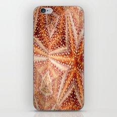 Urchin Mosaic iPhone & iPod Skin