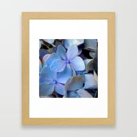 Hydrangea Happy Framed Art Print