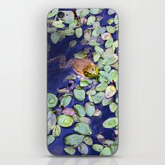 Mr. Frog iPhone & iPod Skin