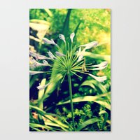 Canvas Print featuring littleflowers by Lindsey