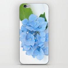 Blue Hydrangeas #1 #decor #art #society6 iPhone & iPod Skin