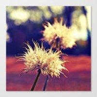 Summer Dandelions Canvas Print