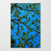 Blue And Green Canvas Print