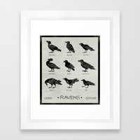 Ravens Framed Art Print