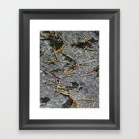 Fir Needle On A Rock Tex… Framed Art Print