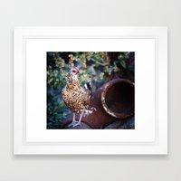 Chicken II Framed Art Print