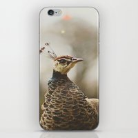 Little Miss Peahen iPhone & iPod Skin