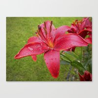 A Lily For Iris Canvas Print