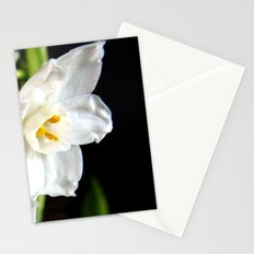 Paperwhites  Stationery Cards