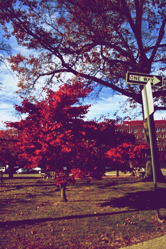 Fall My Way   Red Art Print