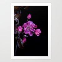 cherry blossom Art Prints featuring Cherry Blossom by CreativeByDesign