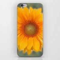 Single Sunflower iPhone & iPod Skin