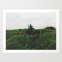 Pine Tree Hill Art Print