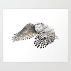 Snowy Owl In Flight Art Print