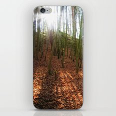 Autumn Sun And Shadows iPhone & iPod Skin